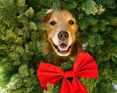 Set of Jolly Golden Retriever Holiday Photo Cards
