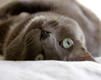 Gray Cat Photo Blank Card