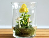 Yellow Lady Slipper Orchid Terrarium in Recycled Glass