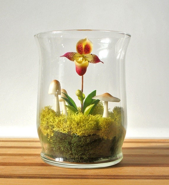 Mini Lady Slipper Orchid Terrarium In Recycled Glass