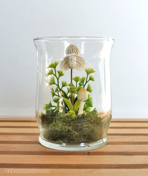 White Lady Slipper Orchid Terrarium in Repurposed Glass