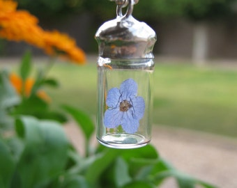Real Forget Me Not, Flower in Glass Vial