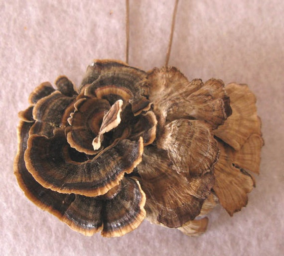 "Wild Mushroom Pendant Pin, Forest Foraged and Preserved Natural Mushrooms, ""Winged Duo"""