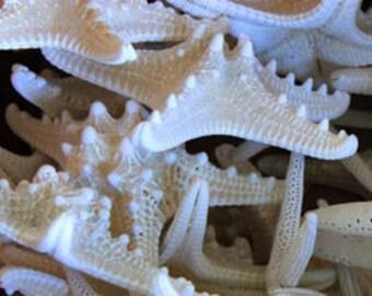 """50 pcs 3-4"""" White Knobby Starfish"""
