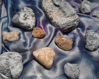 11pc Marine Fossil Specimens Collection