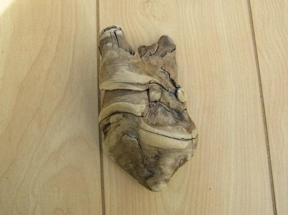 Natural Driftwood Drift Wood from Lake Erie