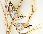 Original Painting - Ink and Coffee Stain on Watercolor 11x14 Illustration : Pair of  Nuthatches on Pussywillow Branch