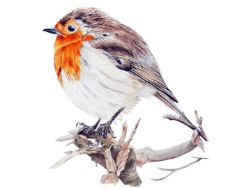 Robin - fine art print, watercolor bird print