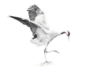 Art Print, Wildlife Painting, Common Crane - Fine art print, bird print, bird painting, bird watercolour, crane.