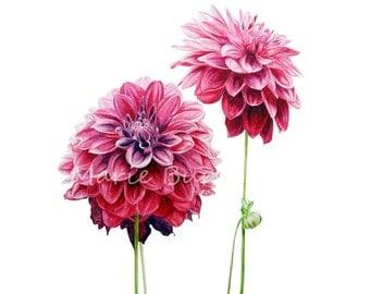 Dahlias - Botanical Art, Art Print, Watercolour Art, botanical watercolor