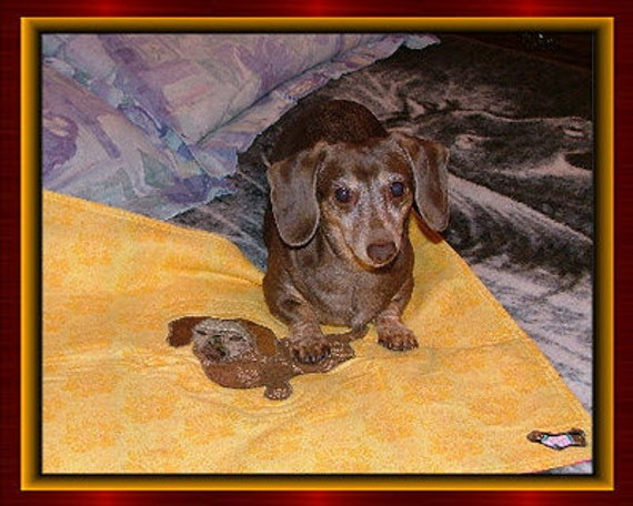 Dachsies With Moxie Tapestries, Quilts and More- Custom Pet Portraits made to order, one of a kind treasures of your beloved family pet.