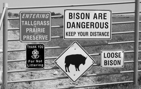 Loose Bison 8x12