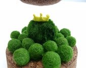 marimo kingdom one little prince - the living green moss ball FREE SHIPPING