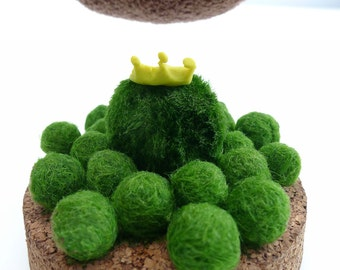 marimo kingdom 3 little BABIES SPECIAL (0.7cm) - the living green moss balls