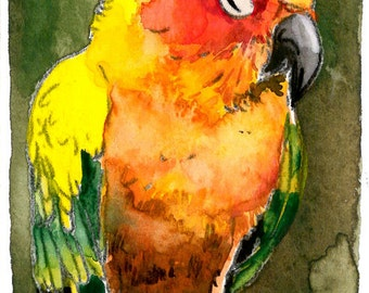 ACEO Limited Edition 6/10- A Patient Parrot, in Watercolor