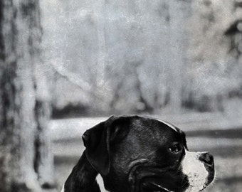 Summer Photography - Puppy Love - 8x10 Print of Boxer