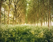 Large Wall Art-Enchanted Forest Wall Art-Tree Photograph of Texel Island, Netherlands-Field of Flowers-Nature Photography-Home Decor-16x20