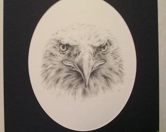 Bald Eagle Pencil Drawing with Mat