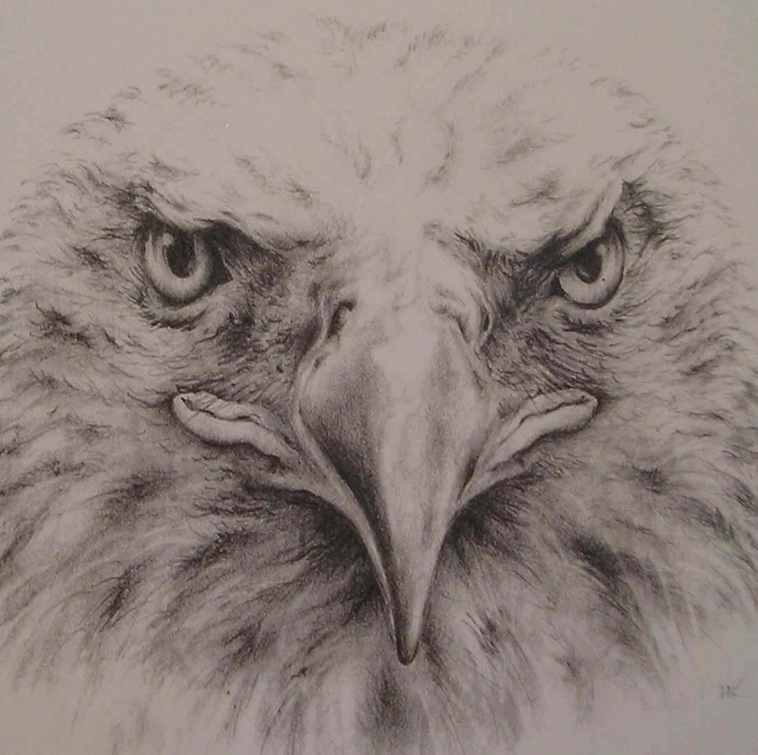 Drawing: Bald Eagle Pencil Drawing With Mat