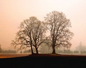 OAK TREES: Nature Photography Print