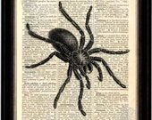 Spider Entomology Print on Upcycled 1896 Latin English Dictionary Page mixed media digital