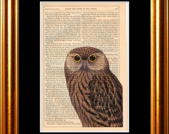 Owl with Yellow Eyes print on vintage (1850's) upcycled book page