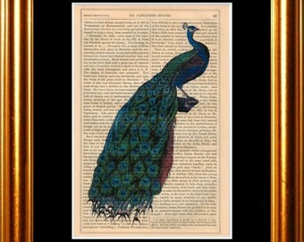 Peacock tail print on vintage (1850's) upcycled book page mixed media digital print art