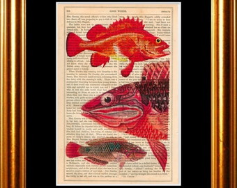Red Fish print on vintage (1860's) upcycled book page mixed media digital
