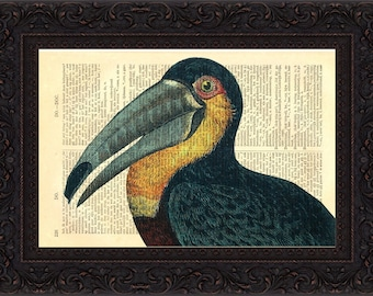 Antique Colourful Toucan  engraving Print on upcycled Dictionary Vintage Page