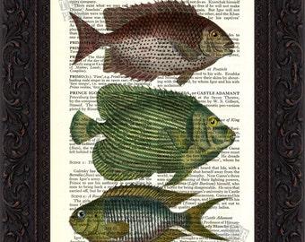 Indian Ocean Fish Antique engraving Print on Vintage Repurposed Page