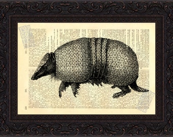 Antique Engraving of 3 Banded Armadillo Print on Vintage Repurposed 1880's Dictionary Page