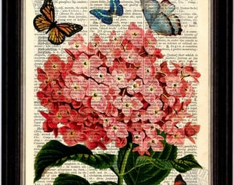 Flower Pink Hydrangea with Butterflies Mixed Media Original Print on Upcycled 1896 Latin English Dictionary Old Book Page