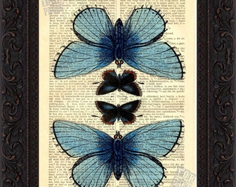 Stunning Blue 4 Moth Print on upcycled Dictionary Vintage Page mixed media digital illustration