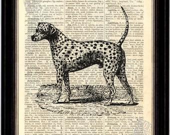 Dalmation Dog Print on Upcycled 1890's Latin English Dictionary Page mixed media digital print art