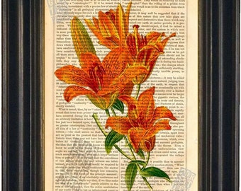 Flower Saffron Lily Engraving Print on vintage upcycled page mixed media digital