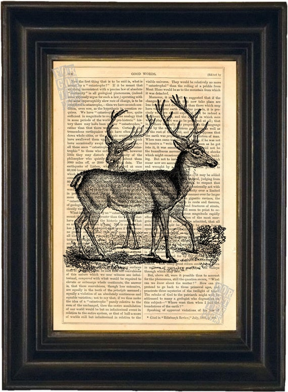 Elegant Deer  Engraving Print on vintage upcycled page mixed media digital
