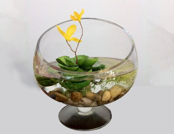 Items similar to free terrarium carnivorous aquarium on etsy for Betta fish floating