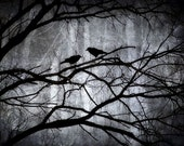 "Crow Print. Witnesses.  8"" X 10"". Two Crows, Mysterious and Magical Forest"