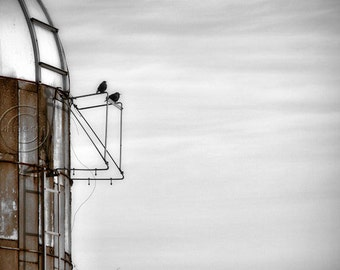 Blackbirds, A Change Is Coming Blackbird Print. Country, Nature, Birds Photography Blue White Brown, Silo
