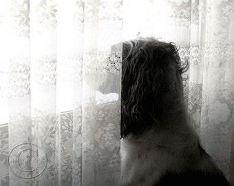 "3:30 -  English Springer Spaniel 8"" X 10""  Print. Dog in the Window, Hunting dog, Man's Best Friend, Bird Dog"