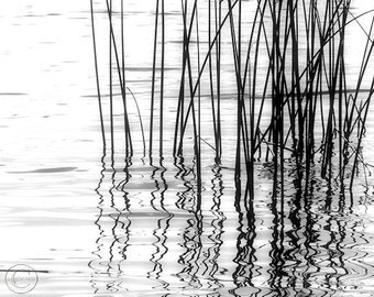 "Reeds Black and White Fine Art Photography Print. 11"" X 14"" Calming Waters, Reflections"