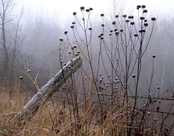 Old Country Fence, Fine Art Photography, Blue Misty Morning, Country Life Print. A Simple Life, Blue, Misty, Morning