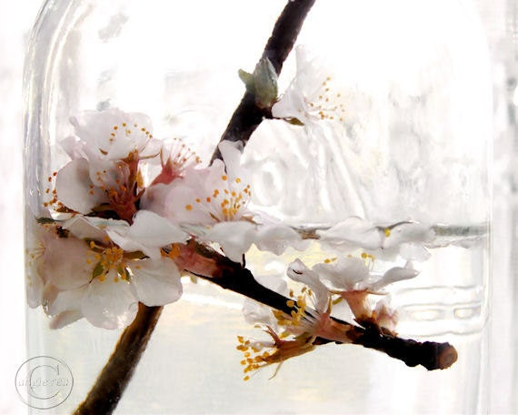 "Cherry Blossoms,  Pink and White Flowers in Jar, Picked Flowers 8"" X 10""  Pink and White Floral Print, Fine Art Photograph"