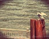 Fine Art Photo Print--Portland Oregon Seagull on the Dock--Fine Art Lomography 8x11