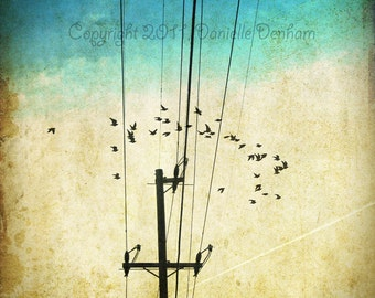 Nature Photography Birds Powerline Turquoise and Beige--Fine-Art Distressed Photography 8x12