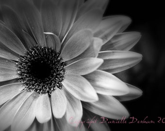 Nature Photography Flower Daisy Gerbera Infrared--Fine Art Black and White Photography 8x12