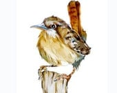 50% off ORIGINAL Carolina Wren Painting 5x7 inch