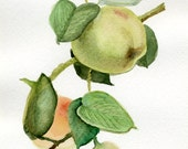 Green Apple painting, original watercolor, olive, mint, fresh, leaves