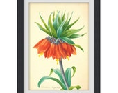 Botanical print 04, produced from a vintage book plate, 8x11 wall art.