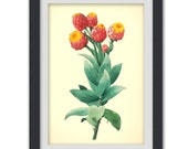 Vintage art 53, a botanical illustration produced from an antique book plate.